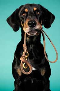 best pet health insurance