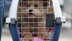 pet transportation services 1